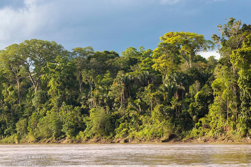 Lowland rainforest along the banks of the Manu River, Manu Biosphere Reserve, Amazonia, Peru.