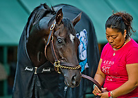 BALTIMORE, MD - MAY 18: Always Dreaming gets a bath after exercising in preparation for the Preakness Stakes this Saturday at Pimlico Race Course on May 18, 2017 in Baltimore, Maryland.(Photo by Scott Serio/Eclipse Sportswire/Getty Images)