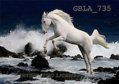 Bob, ANIMALS, collage, horses, photos(GBLA735,#A#) Pferde, caballos