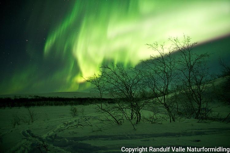 Nordlys over Nordre Stabbursdalsvatn i Finnmark. ----- Northern lights in Finnmark.