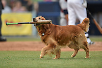 Jake the Diamond Dog during a game between the Rome Braves and the Asheville Tourists on May 16, 2015 in Asheville, North Carolina. The Braves defeated the Tourists 6-3. (Tony Farlow/Four Seam Images)