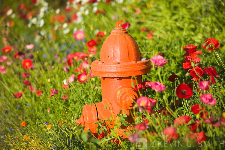 Fire hydrant and flowers, Kodiak Alaska, UA.