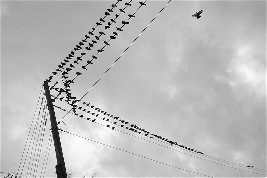 Pigeons<br /> From &quot;Miami in Black and White&quot; series. North Miami Beach, FL, 2009