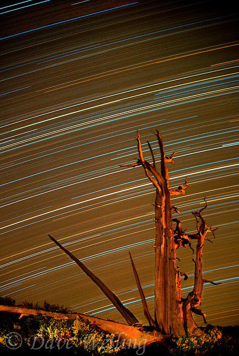 730252057 star trails create an amazing pattern over an ancient bristlecone pine pinus longeava in the bristlecone pine protected lands in the white mountains of central california