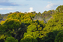 Lowland rainforest, Osa Peninsula, Costa Rica. May.