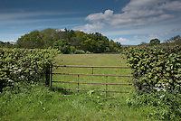 Metal gate and hedge into a grass field, Chipping, Lancashire.