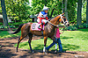 Hurricane Bluff with Marie Rolando aboard in the paddock before the Longines International Ladies Fegentri Amateur race at Delaware Park on 6/8/15