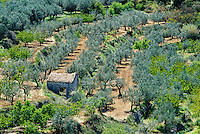 Spain, Costa Blanca, upcountry in Gallinera Valley: Olive Grove with small stone hut | Spanien, Costa Blanca, Val de Gallinera im Landesinneren: Olivenhain mit kleiner Steinhuette