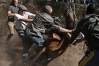 Some &quot;aloitadores&quot; falls down when trying to tame a horse during the San Cibran&acute;s &quot;curro&quot;, in the little town of Gondomar (Galicia) on June 19, 2011. When summertime comes in Galicia (Northwest of Spain), the use of &ldquo;curro&rdquo; begins. A ritual which preserves the free and wild spirit of this region which has remained traditionally tied to nature.<br />