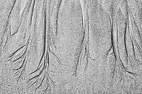 Sand pattern on Long Beach<br /> Pacific Rim National Park<br /> British Columbia<br /> Canada
