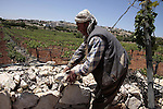 A Palestinian farmer works in his farm near Kharsina settlement in the West Bank city of Hebron on May 24, 2011. as a response to last week's speech by US President Barack Obama in which he said that a Palestinian state must be created based on the borders that existed before the 1967 Six Day War. It banned the construction work in the region in which it operates the farmer because its proximity to the settlement. Photo by Najeh Hashlamoun