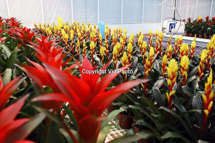 Foto: VidiPhoto<br /> <br /> METERIK – Stefan van de Bogaard vertelt telers over de LED-proef in de Bromelia, tijdens een rondleiding door de proefkas van veredelingsbedrijf Botany in Meterik.