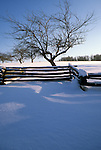 Bare apple tree and split rail fence in the Winter in Liberty, Maine, USA