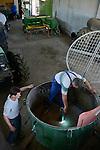 ROMANIA Banat, village Firiteaz, Bio Farmland, a farm run by swiss family / RUMAENIEN Banat, Firiteaz, BIO FARMLAND, betrieben von den Schweizer Einwanderern Familie Häni und Siegrist, Andreas Sigrist kuemmert sich um die Maschinen und die Werkstatt
