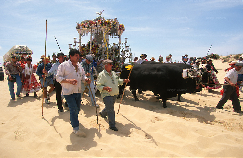 "The pilgrim route of the Hermandade de Sanlucar de Barrameda from Sanlucar across the Parque Donana to El Rocio, Huelva Province, Andalusia, Spain...El Rocio follows on from Semana Santa - Easter week and the various spring ferias, of which Seville's Feria de Abril (April) is the biggest. The processions to the (Hermitage) Hermita de El Rocío, at Pentecost, is the most famous (Romeria) pilgrimage in the Andalusian region, attracting nearly a million people from across Andalusia, Spain and the world. The cult started off in the 13th century when a statue of the virgin Mary was apparently found in a tree trunk in the Donana Park. What was first a local devotion at Pentecost by local pilgrim brotherhoods ""hermandades"" became by the 19th century into dozens of fraternities developed from such as Cadiz, Selville and Huelva. Some walk for several days, others travel with oxen drawn wagons or on horseback, with traction engines and all terrain vehicles, camping along the trail they take. They wear Andalusian costumes, tight breeches, boots, short jackets and frilly flamenco skirts. Many festivities, flamenco dance, laments, songs and music are combined with religious prayers. Devout pilgrims walk as a penance, keeping vows of silence. An emblem of the immaculate conception (sin peche) is carried. On the Pentecost after the stroke of midnight on the whit Sunday the virgin Mary is carried from the church through the streets of El Rocio by each hermandade to visit each brotherhood's shrine."