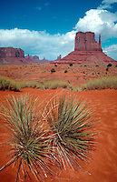 Monument Valley red rock area with yucca plant in foreground. Monument Valley National Park, Arizona.