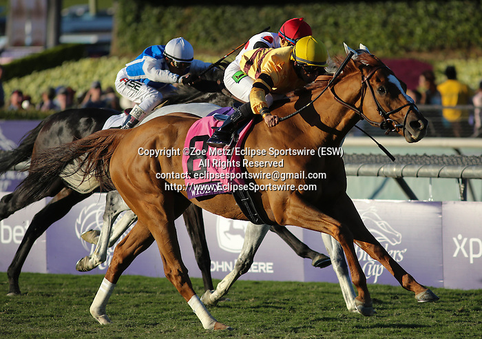 Wise Dan, ridden by Jose Lezcano wins the Breeders' Cup Mile on November 2, 2013 at Santa Anita Park in Arcadia, California during the 30th running of the Breeders' Cup.