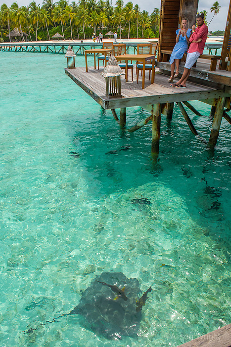 Maldives, Rangali Island. Conrad Hilton Resort. Couple photographing each other. (MR)