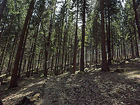 FOREST_LOCATION_90215