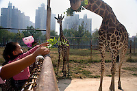 Visitors to the Tianjin Zoo feed bunches of leaves to giraffes in Tianjin, China.