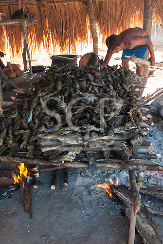 Xingu Indigenous Park, Mato Grosso, Brazil. Aldeia Matipu. Smoking fish for the Kuarup festival.