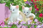 Marek, ANIMALS, REALISTISCHE TIERE, ANIMALES REALISTICOS, cats, photos+++++,PLMP2262,#a#