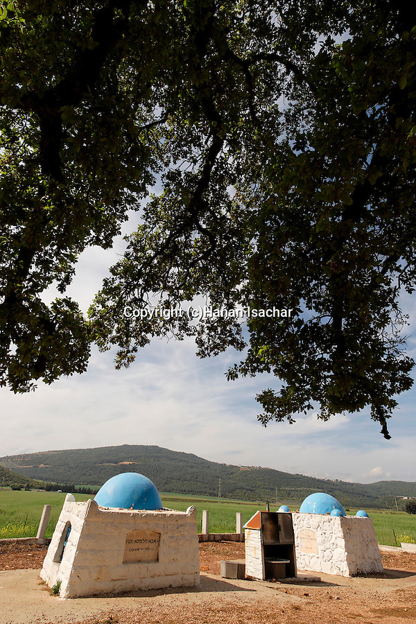 Israel, the Lower Galilee. Mount Tabor Oak tree (Qyercus Ithaburensis) by the tomb of Rabbi Aba Halafta