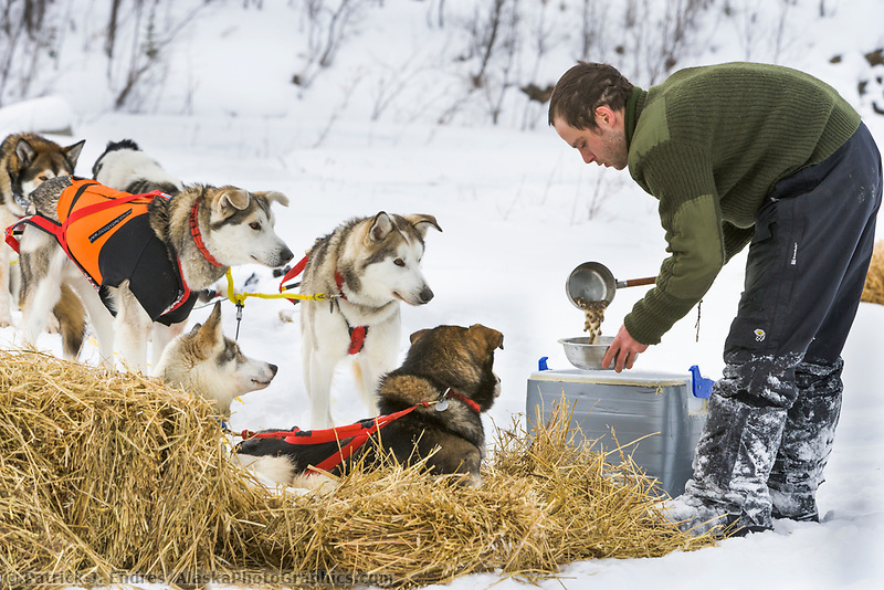 Yukon Quest musher Saul Turner feeds dogs at mile 101 checkpoint.