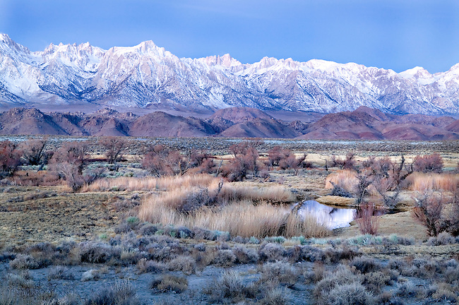 Winter Pre Dawn Pond and Owens Valley Beneath the Sierra Nevada Mt., CA.