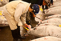 Inspecting a tuna before bidding