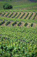 Océanie/Australie/South Australia/Australie Méridionale/Clare Valley/Env. de Sevenhill: Le vignoble