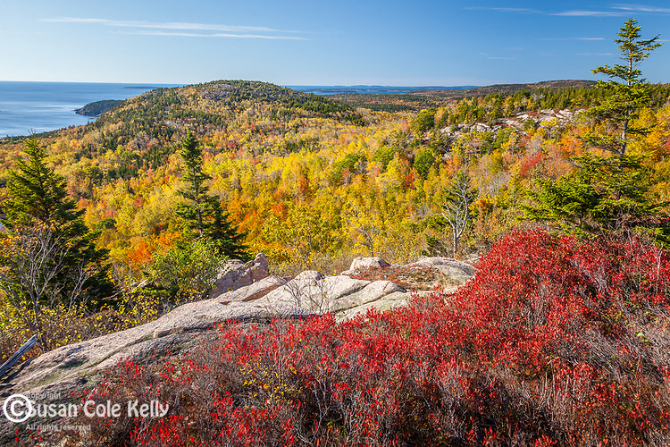 Fall foliage on Acadia's coastal mountains, Acadia National Park, ME