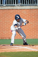 Brett Lashley (12) of the Florida Atlantic Owls squares to bunt against the Charlotte 49ers at Hayes Stadium on March 14, 2015 in Charlotte, North Carolina.  The Owls defeated the 49ers 8-3 in game one of a double header.  (Brian Westerholt/Four Seam Images)