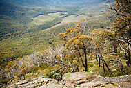 Image Ref: YR134<br />