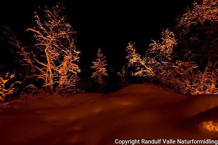 Bjørkeskog lyses opp av bål en vinternatt. ---- Forest in the light from camp fire.