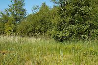 Fen Grassland