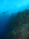 Du Li Jiao (Independence Reef), Green Island - Underwater sea mount with diver.