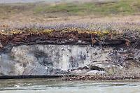 Permafrost lens exposed by erosion along the Nigu river, National Petroleum Reserve, Alaska.