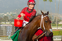 ARCADIA, CA   FEBRUARY 3 : Jockey Tyler Baze sponges off  #5 Itsinthepost, after winning the San Marcos Stakes (Grade ll) on February 3, 2018 at Santa Anita Park in Arcadia, CA.(Photo by Casey Phillips/ Eclipse Sortswire/ Getty Images)