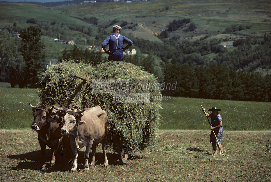 Europe/France/Languedoc-Roussillon/66/Pyrénées -Orientales/Cerdagne/Env de Saillagouse : Fenaison<br /> <br /> PHOTO D'ARCHIVES // ARCHIVAL IMAGES<br /> FRANCE 1980