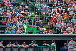 4 September 2017: Vermont Lake Monsters Mascot Champ entertains the fans during a game between the Tri-City ValleyCats and the Vermont Lake Monsters at Centennial Field in Burlington, Vermont. The teams split their games, with Tri-City winning 6-5 in the first, then the Lake Monsters taking the second 7-4 in NY Penn League action. Mandatory Credit: Ed Wolfstein Photo *** RAW (NEF) Image File Available ***