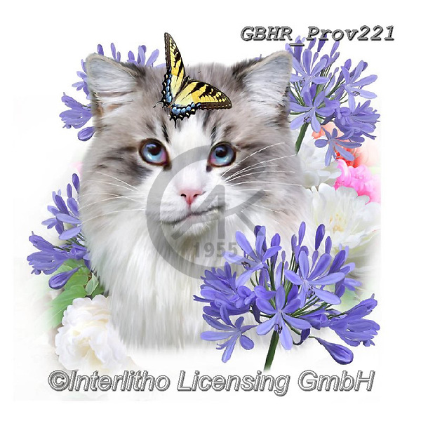 Howard, REALISTIC ANIMALS, REALISTISCHE TIERE, ANIMALES REALISTICOS, paintings+++++Selfie cat 3,GBHRPROV221,#a#, EVERYDAY ,selfies