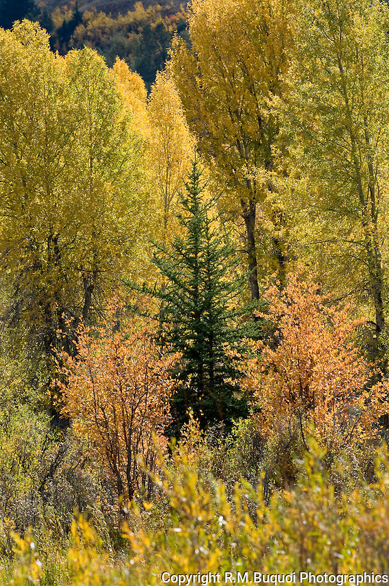 Fall Color in Grand Teton National Park