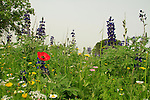 Israel, Menashe Heights, wildflowers near Ein Meholelim