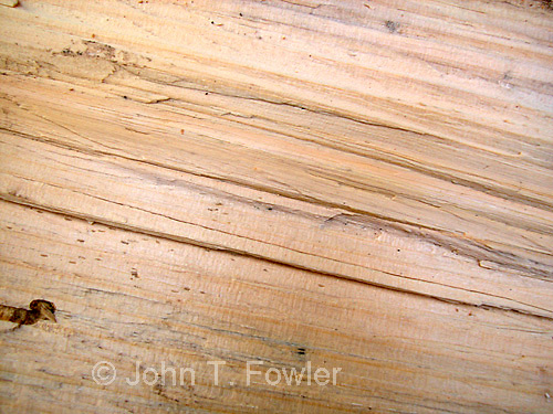 Background of split basswood log<br />