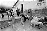 Zapotec Native children take care of their goats on a street inCoatecas Altas village, Oaxaca, November 22, 1998. Most of the villagers of Coatecas leave their home to harvest in northern state of Sinaloa.  © Photo by Heriberto Rodriguez