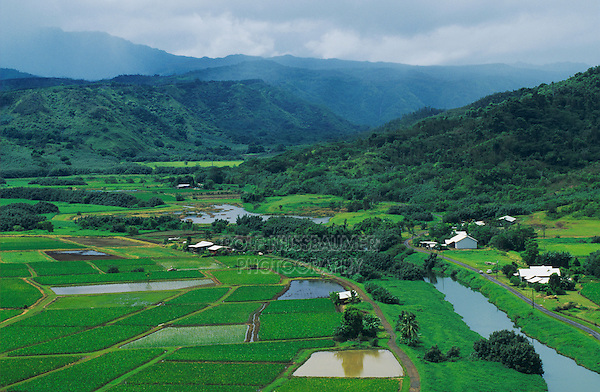 Taro Fields in Hanalei Valley, Hanalei Valley Overlook, Kauai, Hawaii, USA, August 1996