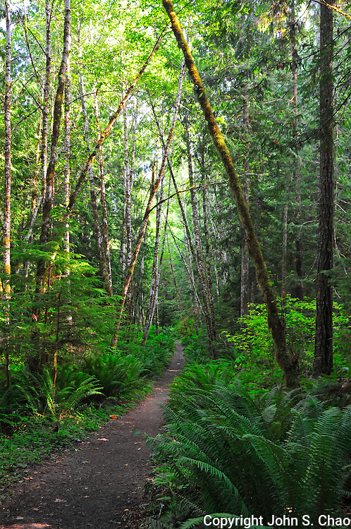 Section of the Spruce Railroad Trail as it leads through forest in Olympic National Park, Washington State.