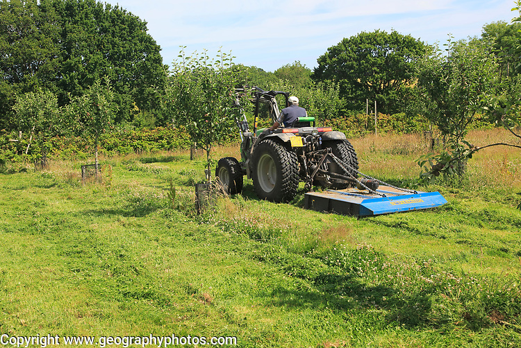 Tractor mowing grass in orchard, Sissinghurst castle gardens, Kent, England, UK