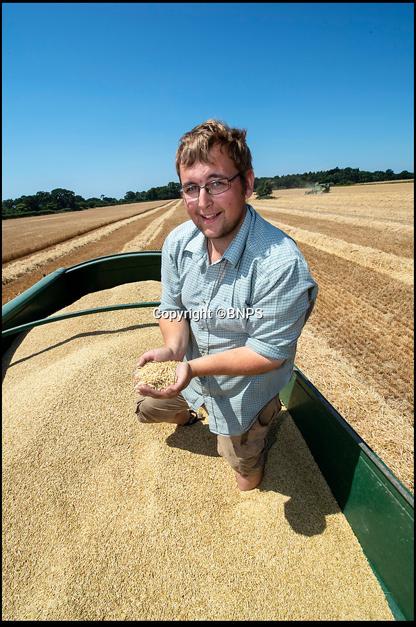 """BNPS.co.uk (01202 558833)<br /> Pic: PhilYeomans/BNPS<br /> <br /> Estate manager Sam Mitchell.<br /> <br /> The heatwave has caused an almost unheard of June harvest at a British farm.<br /> <br /> Bisterne Estate in Ringwood, Hants, produces seed barley, milling wheat and biscuit rye.<br /> <br /> Farm manager Martin Button says this is the earliest harvest there since 1976.<br /> <br /> They began harvesting their 750 acres of arable land on June 28, two weeks earlier than normal.<br /> <br /> However, they are expecting a significantly reduced yield as the barley grain is much smaller than in a typical year, which was been attributed to the dry summer.<br /> <br /> He said: """"We've never started in June in the 30 years I've been here.<br /> <br /> """"The earliest I can remember is July 2, and we would normally start the harvest between the 12th and 14th of July."""